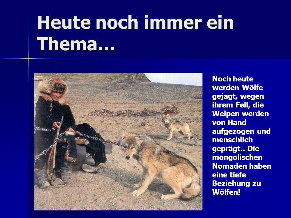 Heute noch immer ein Thema… Noch heute werden Wölfe gejagt, wegen ihrem Fell, die Welpen werden von Hand aufgezogen und menschlich geprägt..