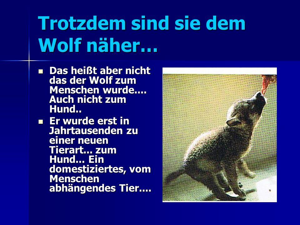 Trotzdem sind sie dem Wolf näher… Das heißt aber nicht das der Wolf zum Menschen wurde....