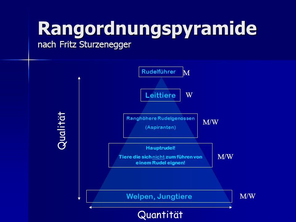 Rangordnungspyramide nach Fritz Sturzenegger Leittiere Rudelführer Ranghöhere Rudelgenossen (Aspiranten) Hauptrudel.