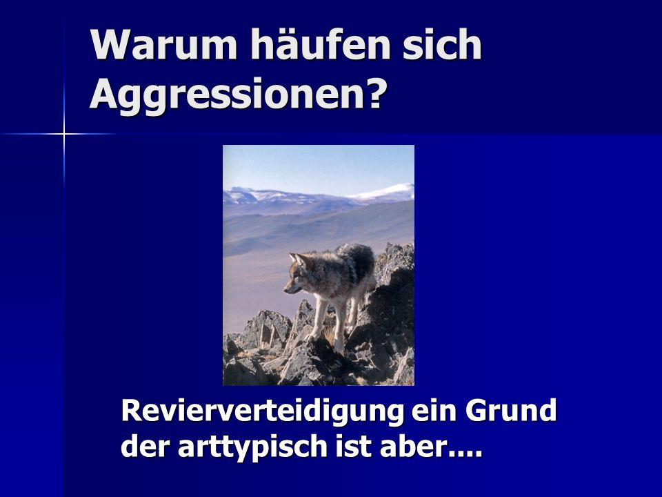Warum häufen sich Aggressionen? Revierverteidigung ein Grund der arttypisch ist aber....