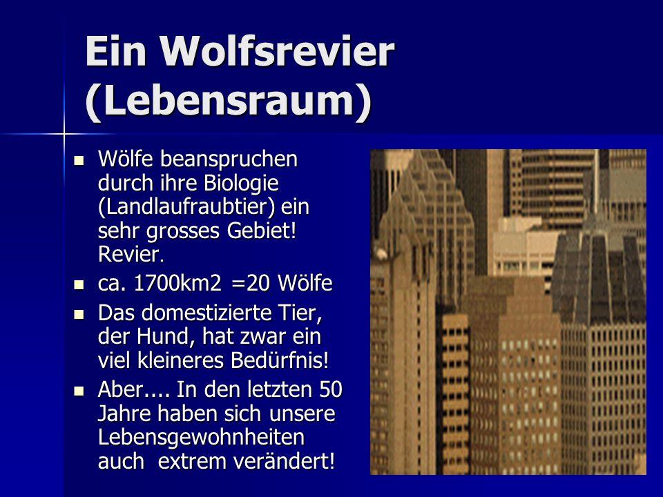 Ein Wolfsrevier (Lebensraum) Wölfe beanspruchen durch ihre Biologie (Landlaufraubtier) ein sehr grosses Gebiet.