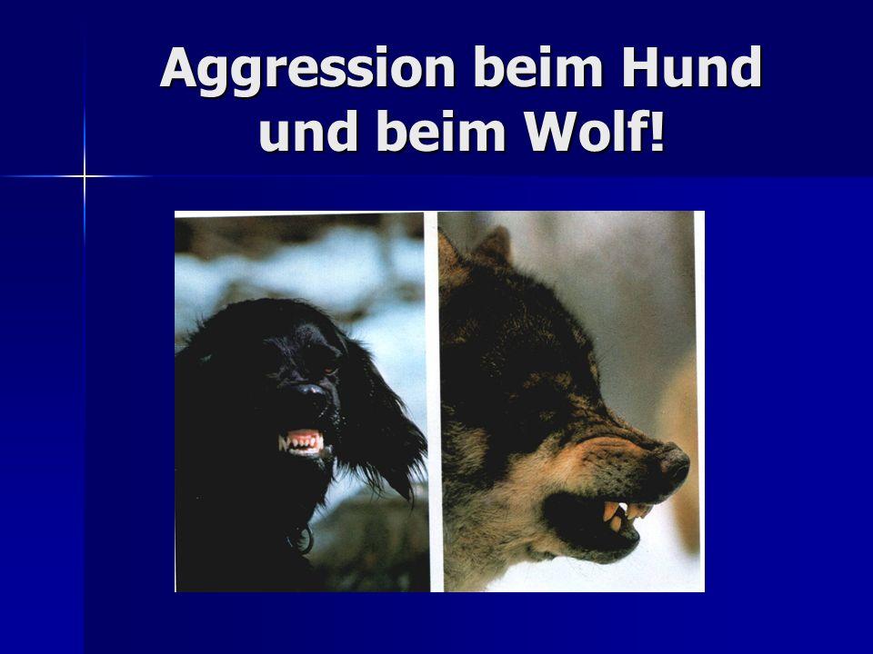 Aggression beim Hund und beim Wolf!