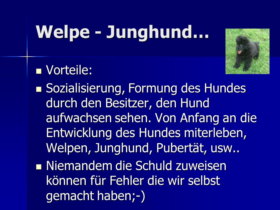 Welpe - Junghund… Vorteile: Vorteile: Sozialisierung, Formung des Hundes durch den Besitzer, den Hund aufwachsen sehen.