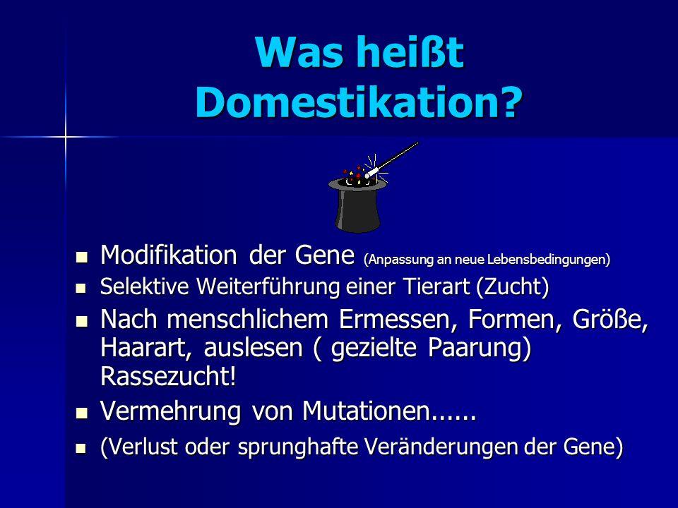 Was heißt Domestikation.