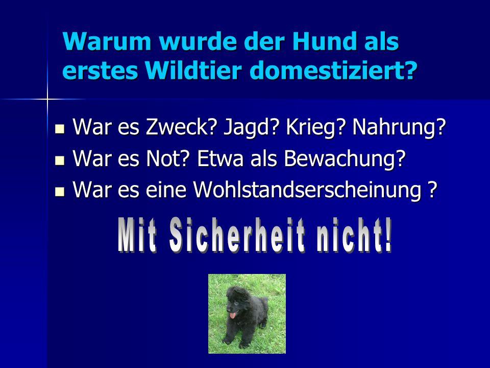 Warum wurde der Hund als erstes Wildtier domestiziert.