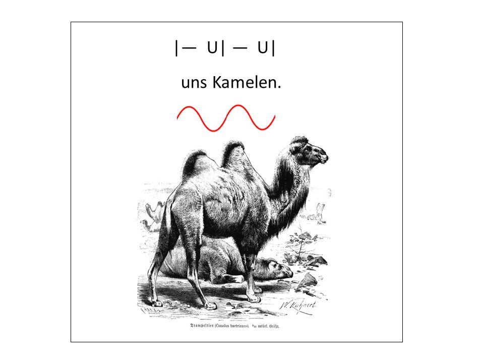| U| U| uns Kamelen.