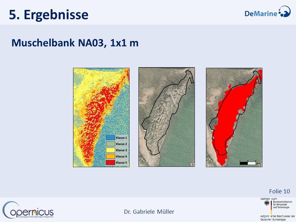 Gefördert durch: aufgrund eines Beschlusses des Deutschen Bundestages Dr. Gabriele Müller Folie 10 5. Ergebnisse Muschelbank NA03, 1x1 m