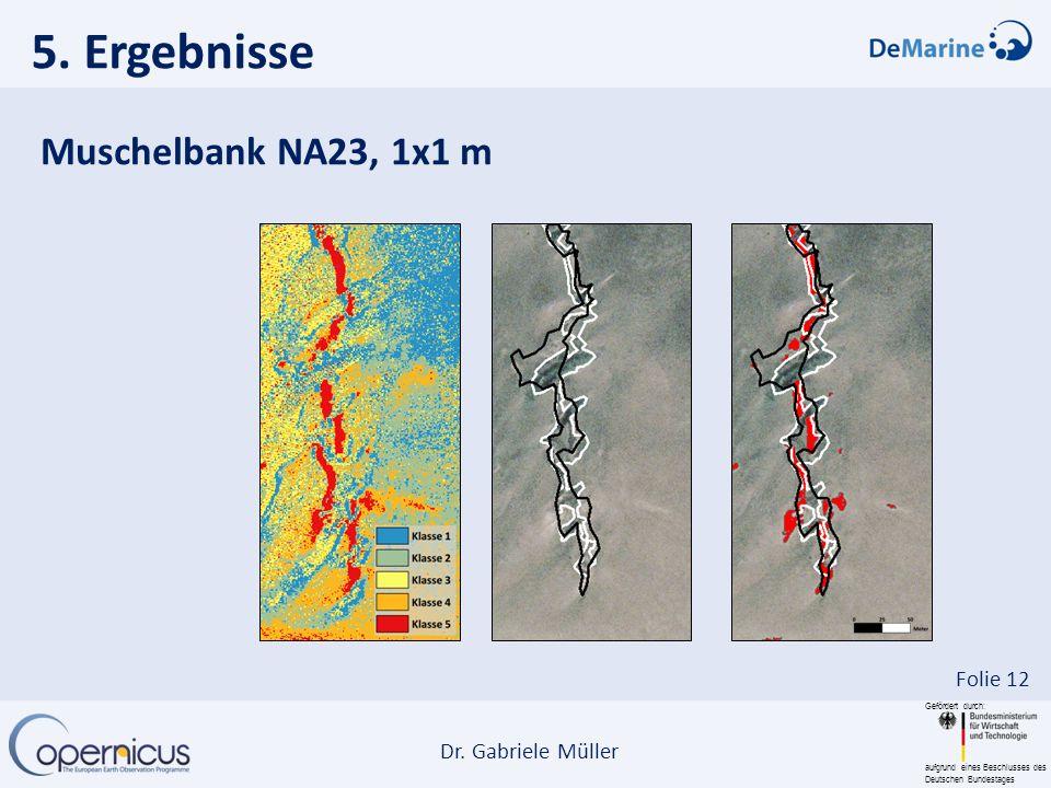 Gefördert durch: aufgrund eines Beschlusses des Deutschen Bundestages Dr. Gabriele Müller Folie 12 5. Ergebnisse Muschelbank NA23, 1x1 m