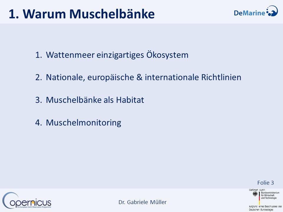 Gefördert durch: aufgrund eines Beschlusses des Deutschen Bundestages Dr. Gabriele Müller Folie 3 1. Warum Muschelbänke 1.Wattenmeer einzigartiges Öko