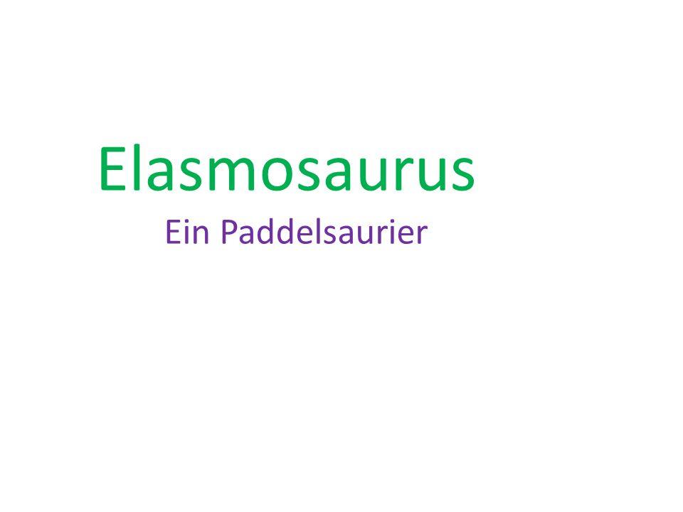 ist eine Gattung der Plesiosaurier aus der Oberkreide von NordamerikaGattung Plesiosaurier Oberkreide Der Gattungsname bedeutet Plattenechse (gr.