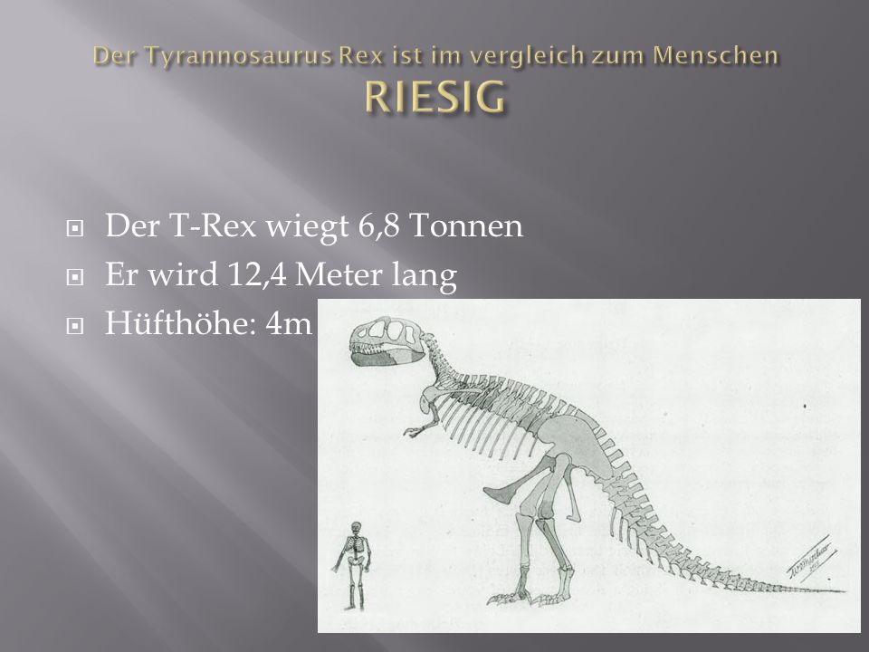 Der T-Rex ist ein Fleischfresser und ist sehr stark Aber er hat zum kämpfen nur den Kopf und das Maul da seine Arme sehr klein sind