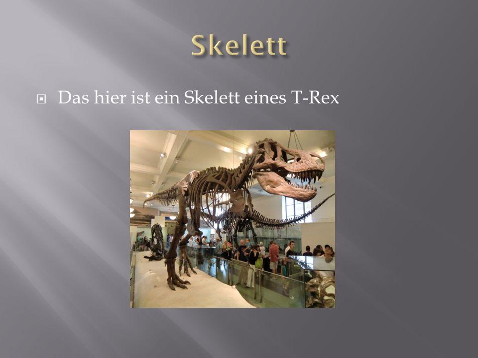 Der erste Fund eines T-Rex waren Zähne Diese wurden 1874 von A.Lakes in der nähe Goldens in Colorado gefunden Wirbel Fragmente wurden von Edward Drinker Cope im Jahre 1892 in South Dakota gefunden