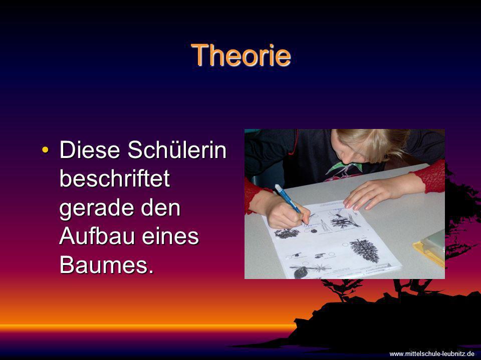 Theorie Diese Schülerin beschriftet gerade den Aufbau eines Baumes.Diese Schülerin beschriftet gerade den Aufbau eines Baumes.