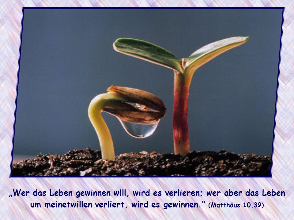 Wer das Leben gewinnen will, wird es verlieren; wer aber das Leben um meinetwillen verliert, wird es gewinnen.