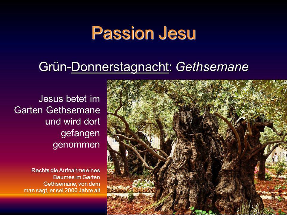 Passion Jesu Grün-Donnerstagnacht: Gethsemane Jesus betet im Garten Gethsemane und wird dort gefangen genommen Rechts die Aufnahme eines Baumes im Garten Gethsemane, von dem man sagt, er sei 2000 Jahre alt