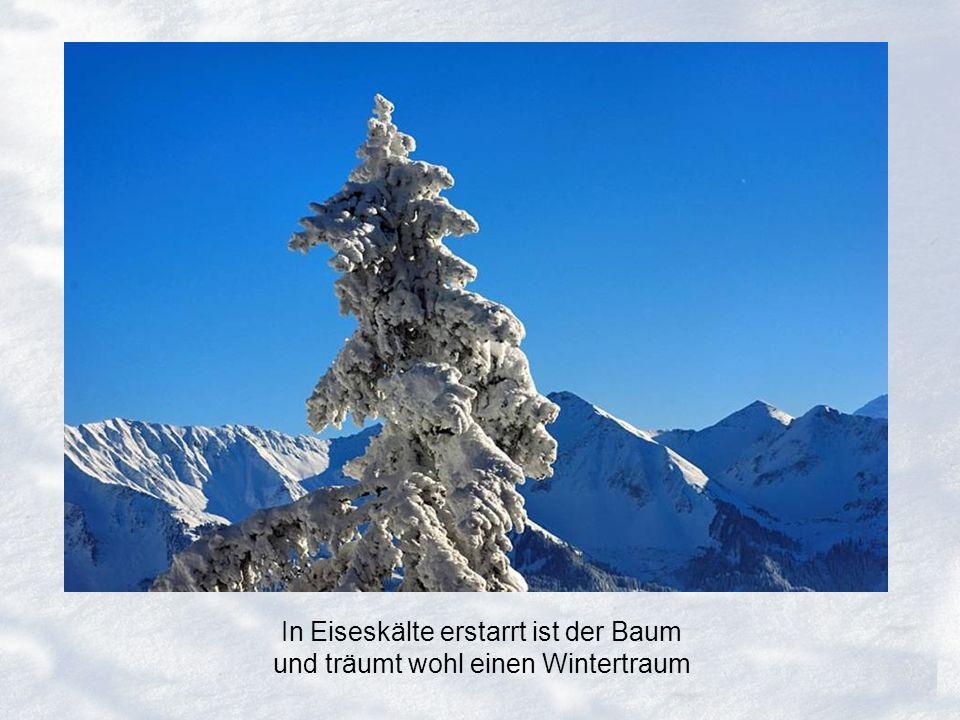In Eiseskälte erstarrt ist der Baum und träumt wohl einen Wintertraum