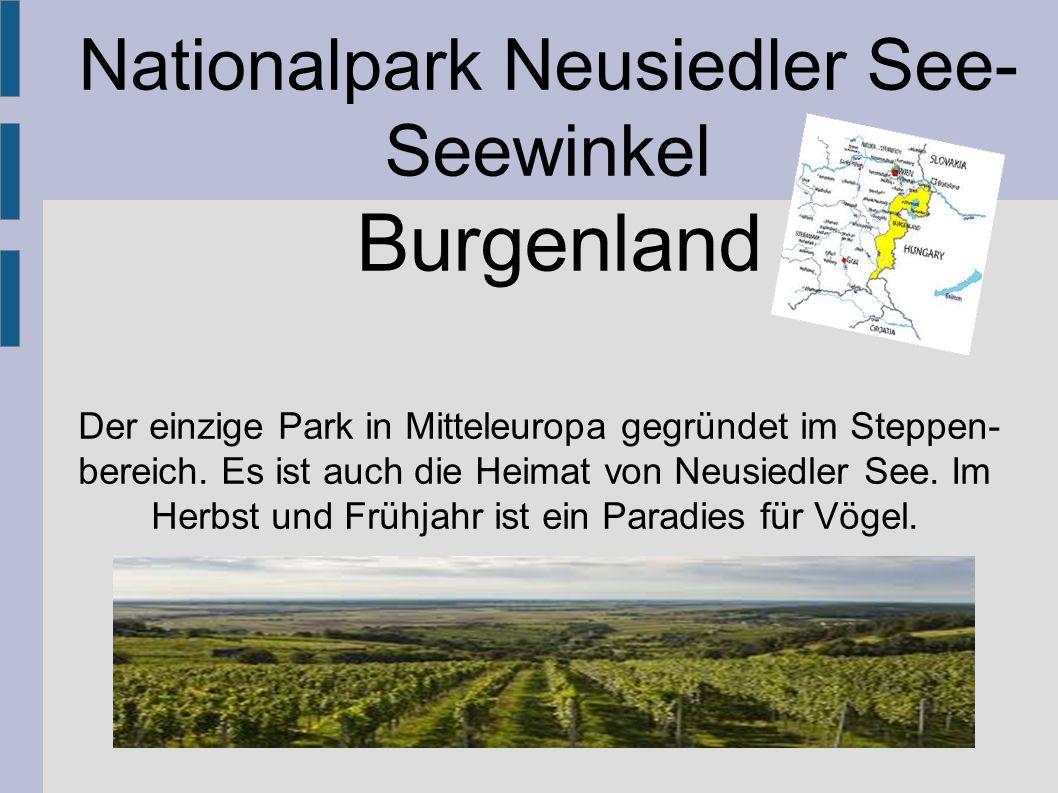 Der einzige Park in Mitteleuropa gegründet im Steppen- bereich. Es ist auch die Heimat von Neusiedler See. Im Herbst und Frühjahr ist ein Paradies für