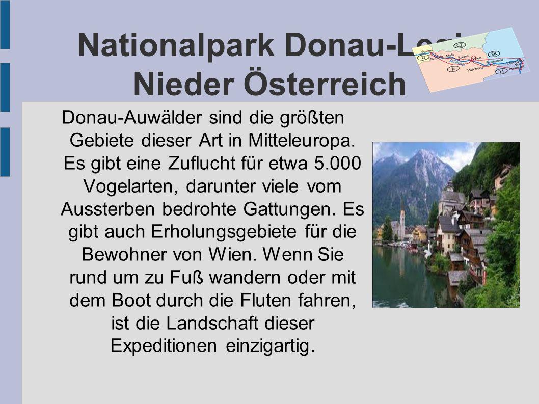 Nationalpark Donau-Legi Nieder Österreich Donau-Auwälder sind die größten Gebiete dieser Art in Mitteleuropa. Es gibt eine Zuflucht für etwa 5.000 Vog