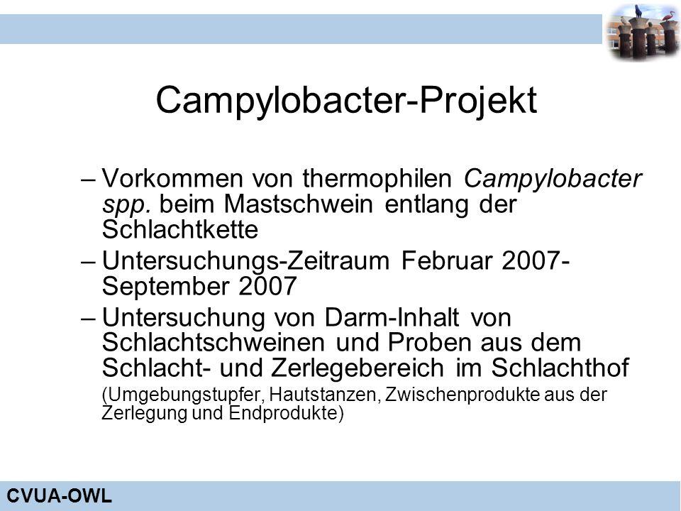 CVUA-OWL Campylobacter-Projekt –Vorkommen von thermophilen Campylobacter spp. beim Mastschwein entlang der Schlachtkette –Untersuchungs-Zeitraum Febru