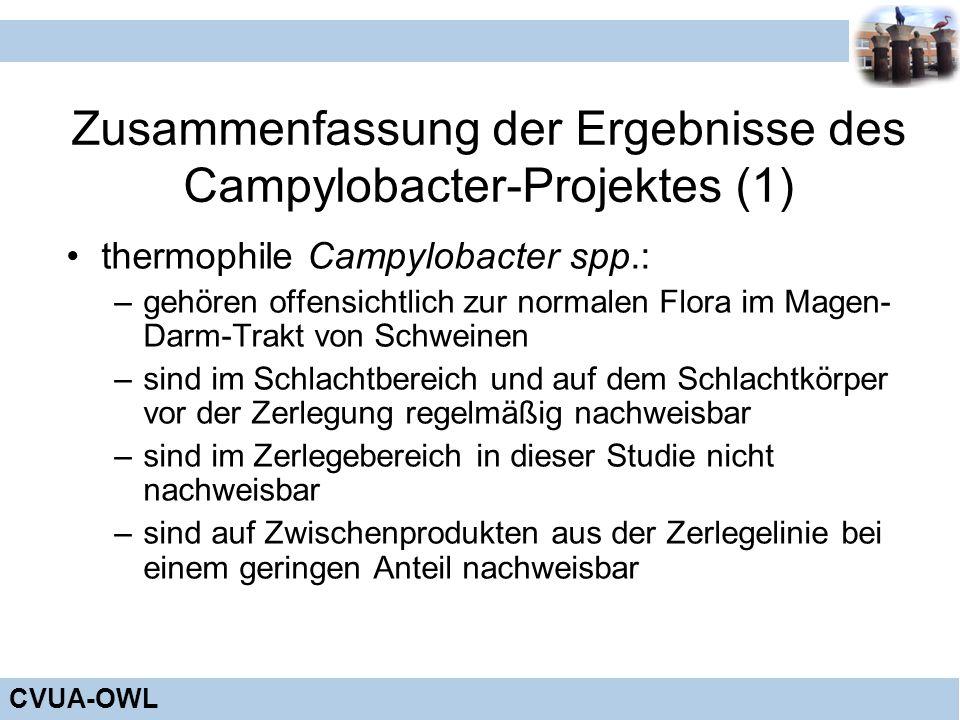 CVUA-OWL Zusammenfassung der Ergebnisse des Campylobacter-Projektes (1) thermophile Campylobacter spp.: –gehören offensichtlich zur normalen Flora im