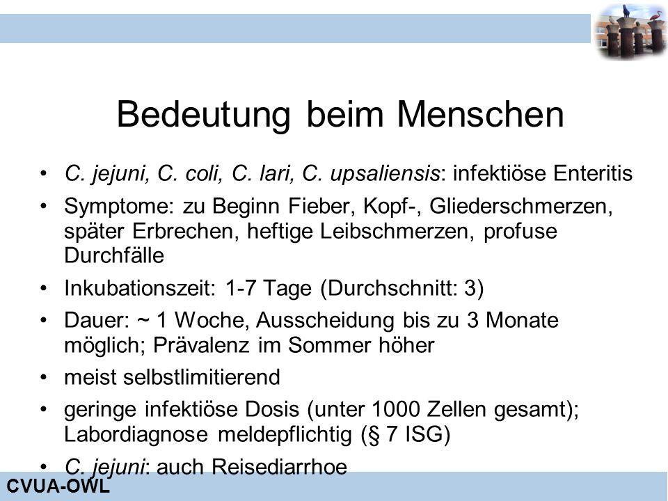 CVUA-OWL Bedeutung beim Menschen C. jejuni, C. coli, C. lari, C. upsaliensis: infektiöse Enteritis Symptome: zu Beginn Fieber, Kopf-, Gliederschmerzen