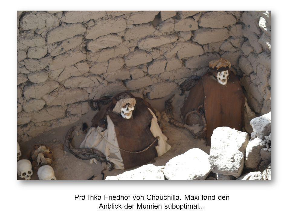 Prä-Inka-Friedhof von Chauchilla. Maxi fand den Anblick der Mumien suboptimal...