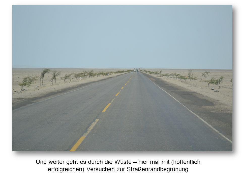 Und weiter geht es durch die Wüste – hier mal mit (hoffentlich erfolgreichen) Versuchen zur Straßenrandbegrünung