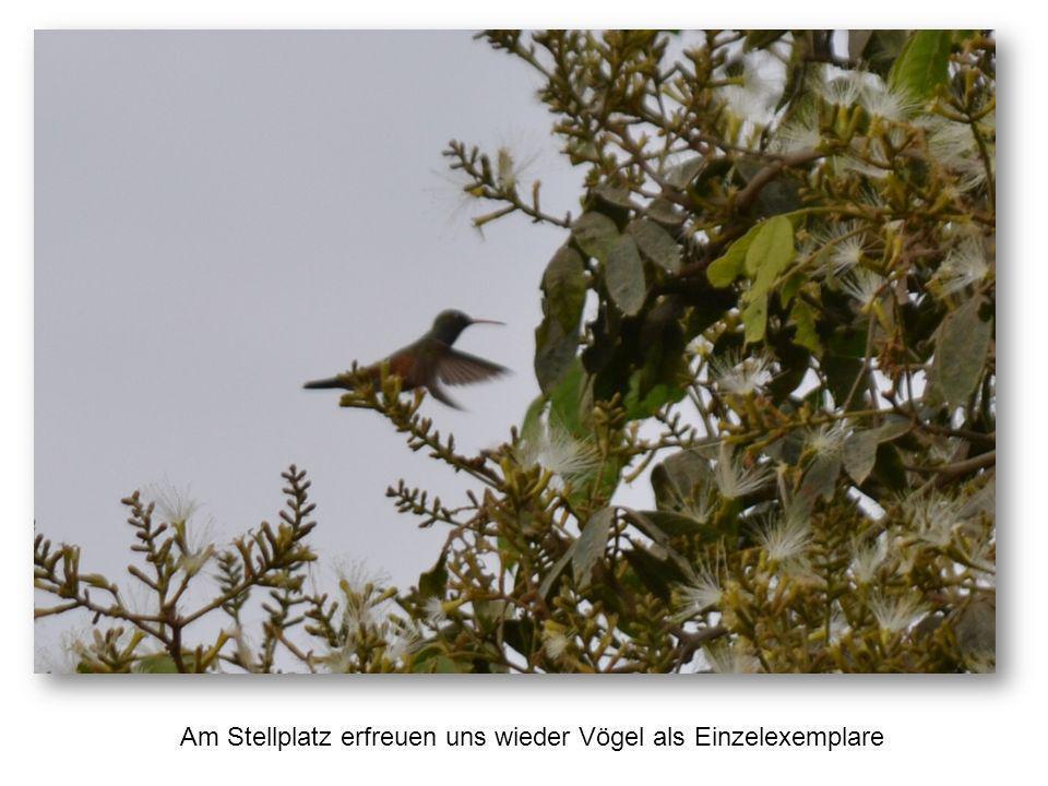 Am Stellplatz erfreuen uns wieder Vögel als Einzelexemplare