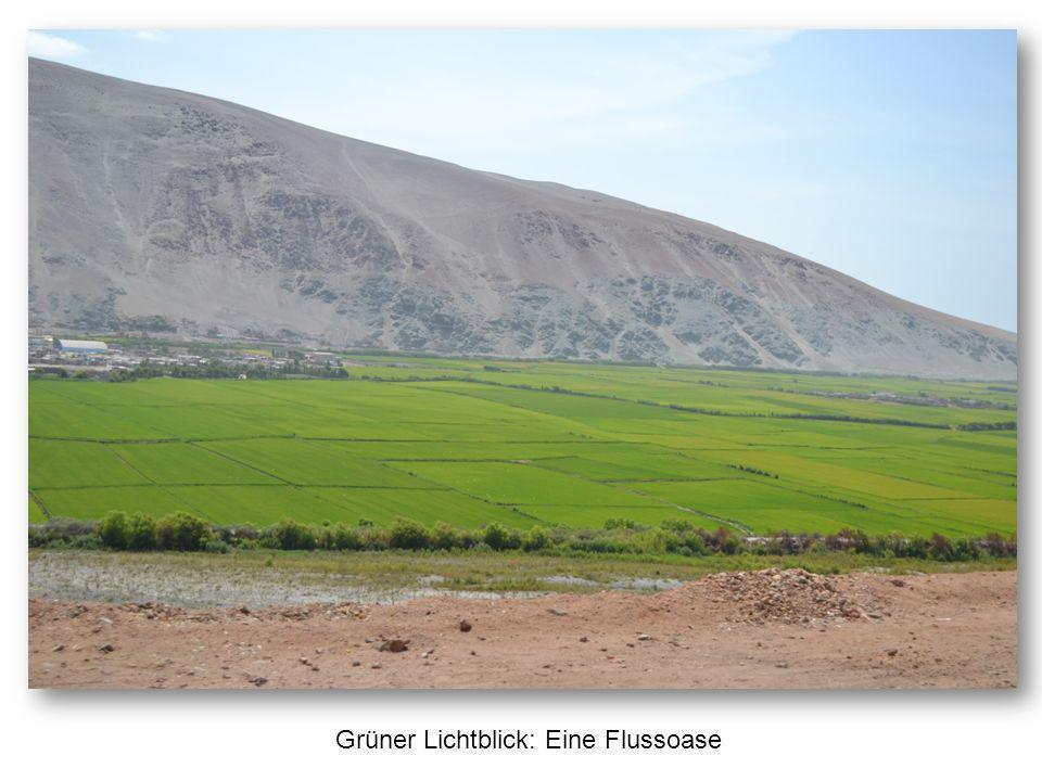 Und dann geht es in tollkühner Fahrt über die Dünen von Huacachina – hier ein Standbild für die Daheimgebliebenen