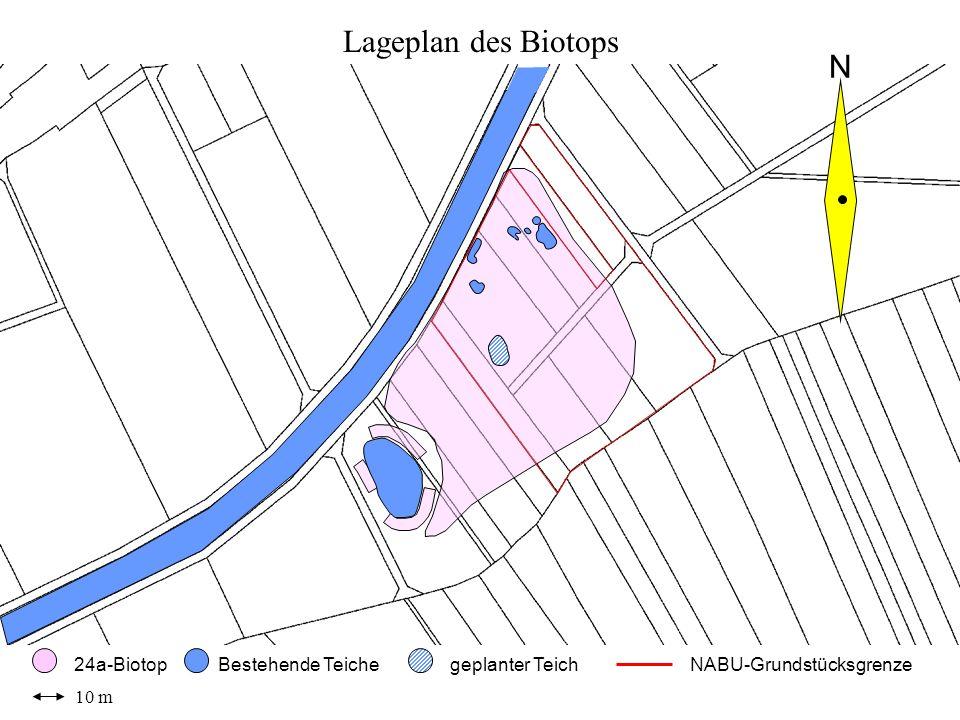 10 m 24a-BiotopBestehende Teichegeplanter Teich N Lageplan des Biotops NABU-Grundstücksgrenze