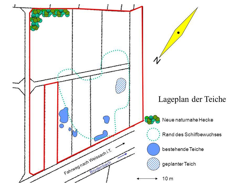bestehende Teiche Rand des Schilfbewuchses geplanter Teich Fahrweg nach Weissach i.T. Brüdenbach 10 m N Lageplan der Teiche Neue naturnahe Hecke