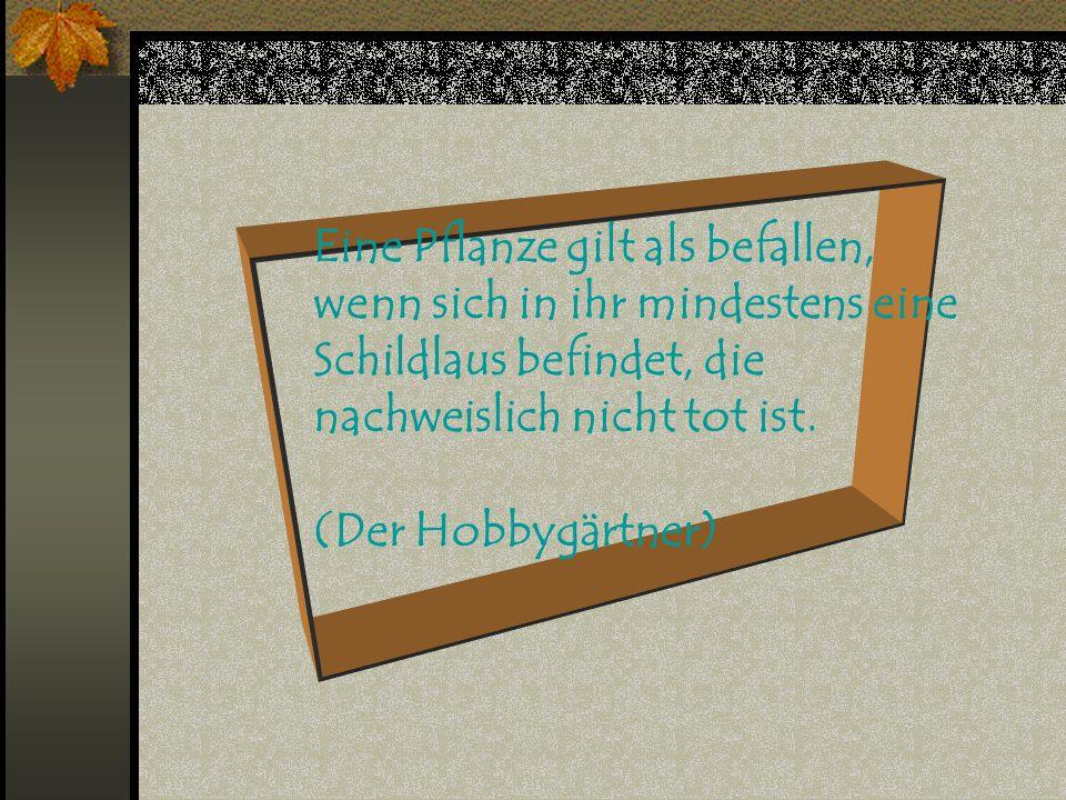 Das Lutschen eines Hustenbonbons durch einen erkälteten Zeugen stellt keine Ungebühr im Sinne von § 178 GVG dar. (Beschluss des OLG Schleswig)