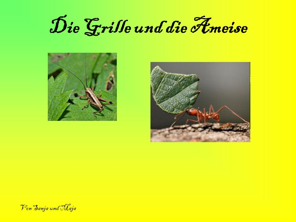 Die Grille und die Ameise Von Sanja und Maja