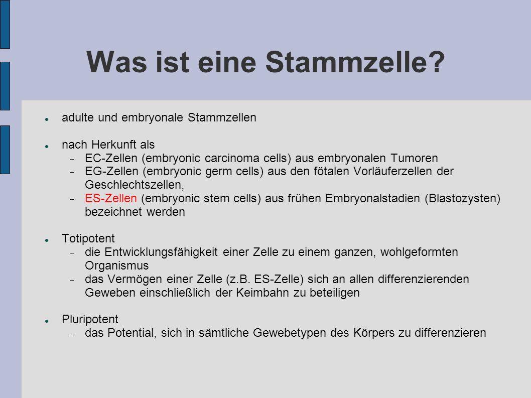 Was ist eine Stammzelle? adulte und embryonale Stammzellen nach Herkunft als EC-Zellen (embryonic carcinoma cells) aus embryonalen Tumoren EG-Zellen (