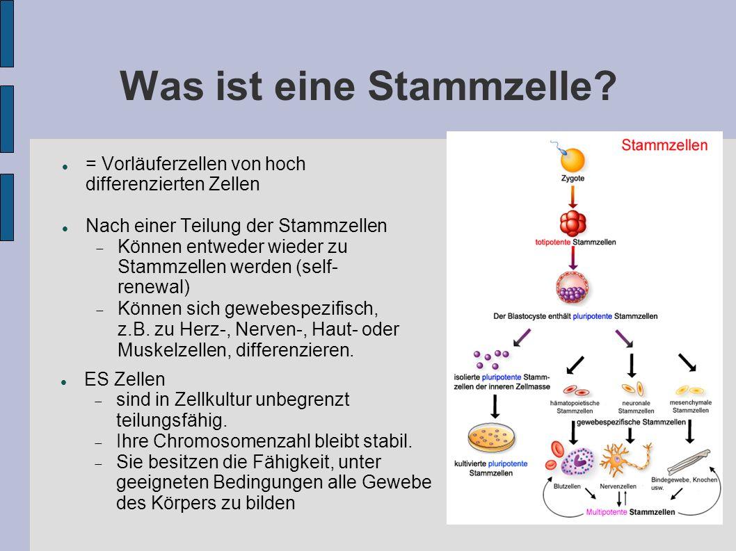 Was ist eine Stammzelle? = Vorläuferzellen von hoch differenzierten Zellen Nach einer Teilung der Stammzellen Können entweder wieder zu Stammzellen we