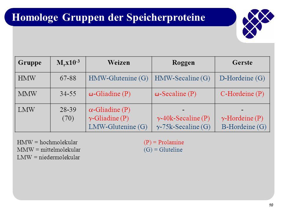 10 Homologe Gruppen der Speicherproteine GruppeM r x10 -3 WeizenRoggenGerste HMW67-88HMW-Glutenine (G)HMW-Secaline (G)D-Hordeine (G) MMW34-55 -Gliadine (P) -Secaline (P) C-Hordeine (P) LMW28-39 (70) -Gliadine (P) -Gliadine (P) LMW-Glutenine (G) - -40k-Secaline (P) -75k-Secaline (G) - -Hordeine (P) B-Hordeine (G) HMW = hochmolekular(P) = Prolamine MMW = mittelmolekular(G) = Gluteline LMW = niedermolekular