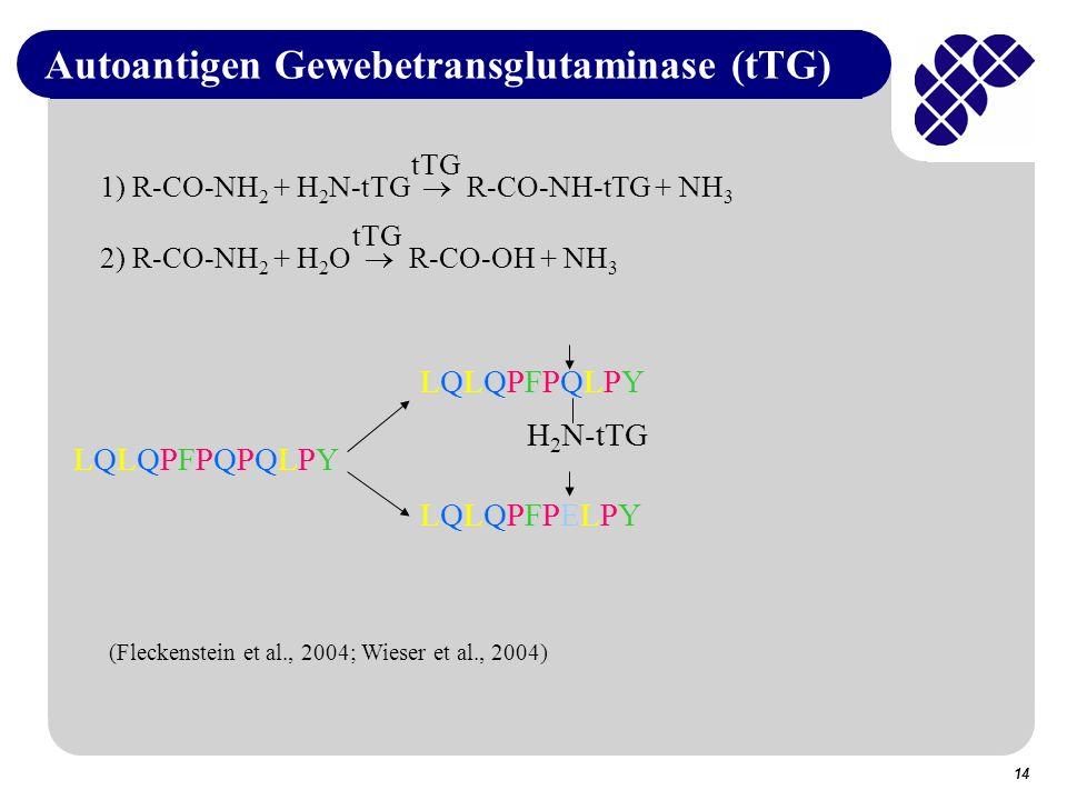 14 Autoantigen Gewebetransglutaminase (tTG) tTG 2) R-CO-NH 2 + H 2 O R-CO-OH + NH 3 tTG 1) R-CO-NH 2 + H 2 N-tTG R-CO-NH-tTG + NH 3 LQLQPFPQPQLPYLQLQPFPQPQLPY LQLQPFPELPYLQLQPFPELPY LQLQPFPQLPYLQLQPFPQLPY H 2 N-tTG (Fleckenstein et al., 2004; Wieser et al., 2004)