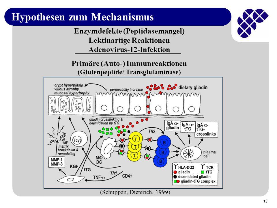 15 Hypothesen zum Mechanismus Enzymdefekte (Peptidasemangel) Lektinartige Reaktionen Adenovirus-12-Infektion Primäre (Auto-) Immunreaktionen (Glutenpeptide/ Transglutaminase) (Schuppan, Dieterich, 1999)