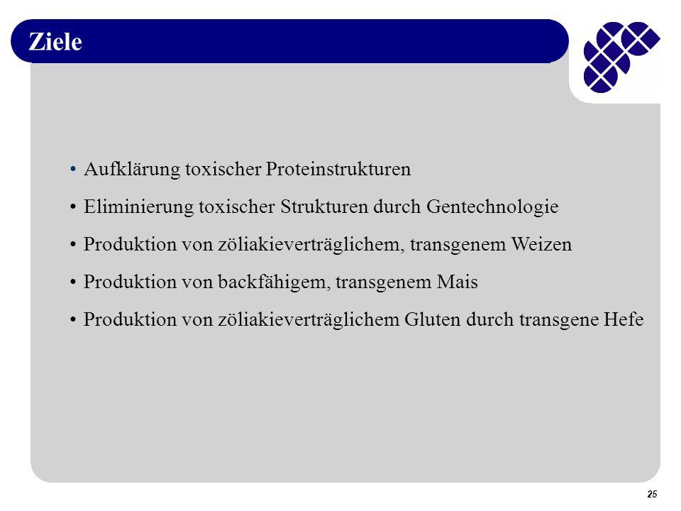 25 Ziele Aufklärung toxischer Proteinstrukturen Eliminierung toxischer Strukturen durch Gentechnologie Produktion von zöliakieverträglichem, transgenem Weizen Produktion von backfähigem, transgenem Mais Produktion von zöliakieverträglichem Gluten durch transgene Hefe