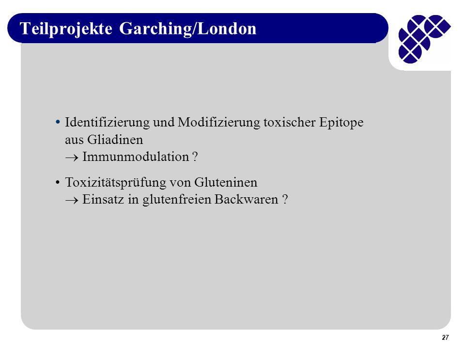 27 Teilprojekte Garching/London Identifizierung und Modifizierung toxischer Epitope aus Gliadinen Immunmodulation .