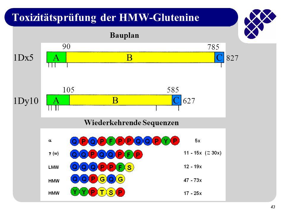 43 Toxizitätsprüfung der HMW-Glutenine 1Dx5 1Dy10 90 785 827 Bauplan ABC 105585 627 ABC Wiederkehrende Sequenzen