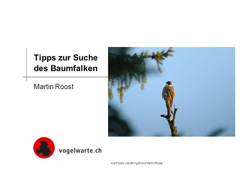Tipps zur Suche des Baumfalken Martin Roost Alle Fotos: Ueli Bringolf und Martin Roost