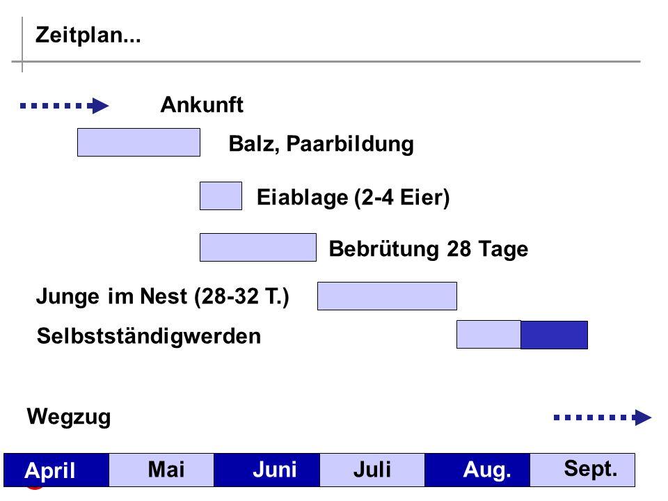 Zeitplan...MaiJuniJuliAug. Sept.