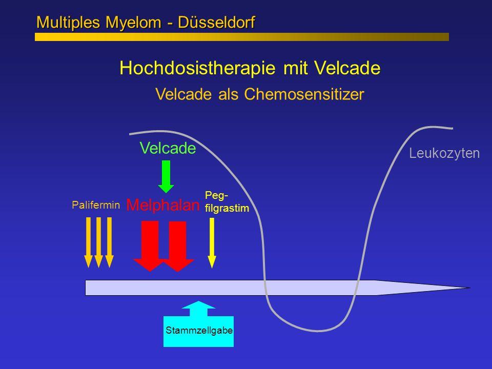 Hochdosistherapie mit Velcade Multiples Myelom - Düsseldorf Velcade als Chemosensitizer Melphalan Palifermin Peg- filgrastim Velcade Leukozyten Stammz