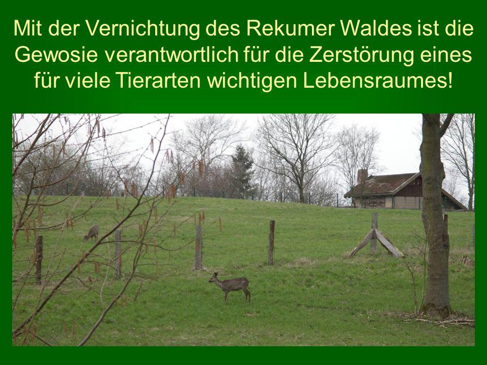 Mit der Vernichtung des Rekumer Waldes ist die Gewosie verantwortlich für die Zerstörung eines für viele Tierarten wichtigen Lebensraumes!