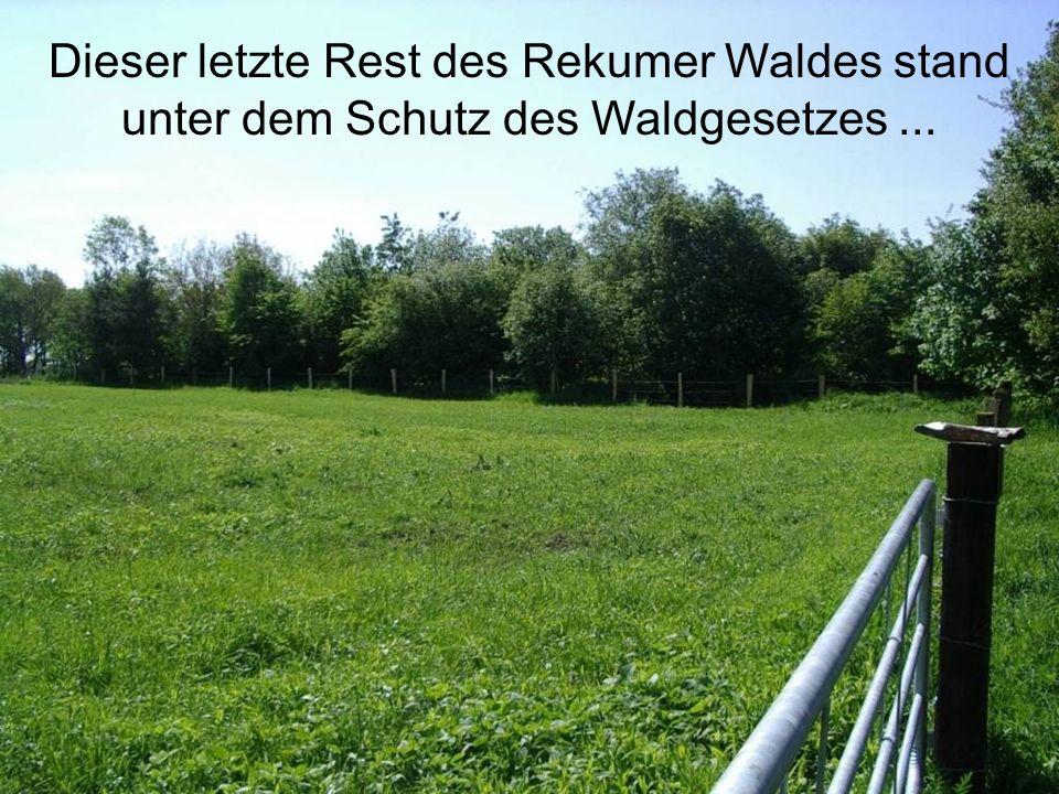 Dieser letzte Rest des Rekumer Waldes stand unter dem Schutz des Waldgesetzes...
