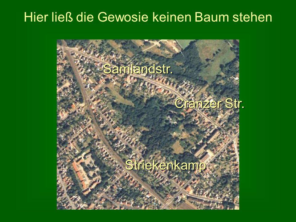 Hier ließ die Gewosie keinen Baum stehen Samlandstr. Striekenkamp Cranzer Str.