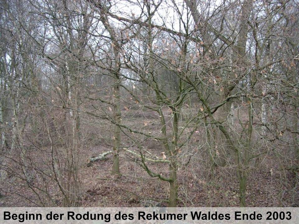 Beginn der Rodung des Rekumer Waldes Ende 2003