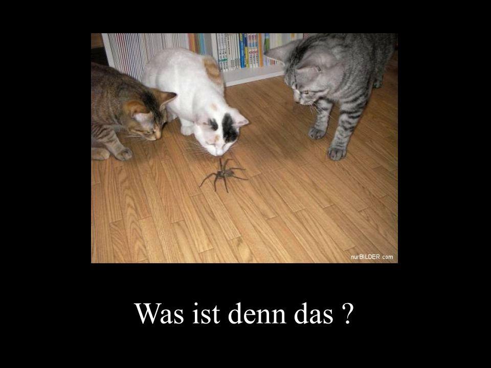 verteilt durch www.funmail2u.dewww.funmail2u.de ………kommt ihnen ein Falschfahrer entgegen