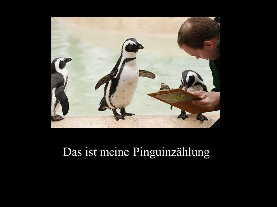 Das ist meine Pinguinzählung